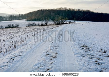 Snow-covered country lane with stubble field on the left, field on the right and wood in front in early tomorrow