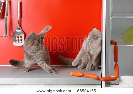 Funny cats fighting for sausages in kitchen