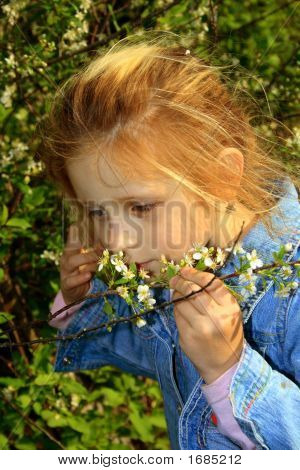 The Small Girl Noses A Flowers