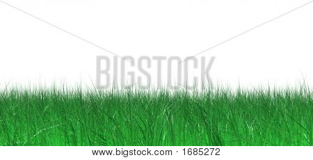 Lawn Of Green Juicy Grass