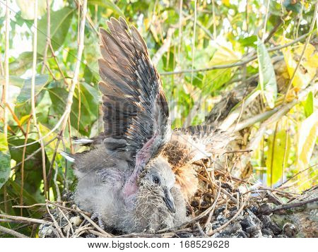 Baby bird on nest and trying to fly