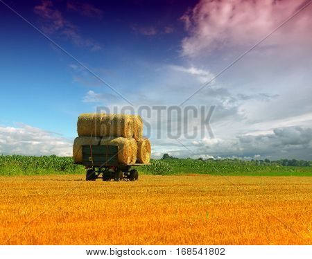 Tractor collecting straw bales