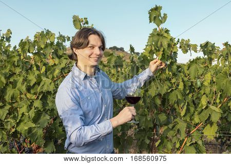 A photo of a happy winemaker checking his vines and wine in a vineyard at harvest time