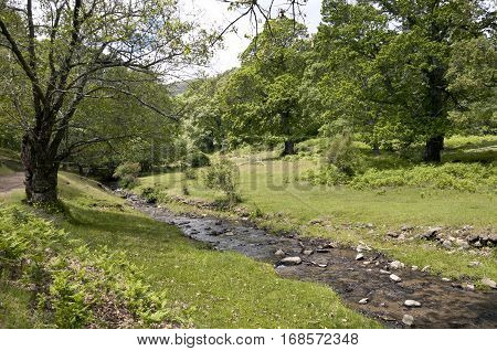 Small stream in Iruelas Valley Natural Park, Avila, Spain