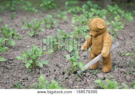Teddy bear works hard in the garden