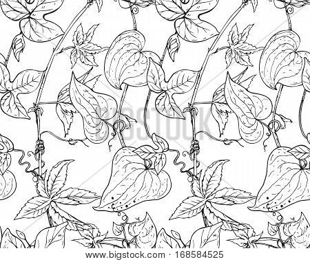 Vector seamless pattern with hand drawn bindweed flowers. Black and white endless background.