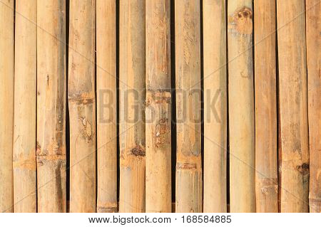 Bamboo background, Vertical, texture of bamboo wall