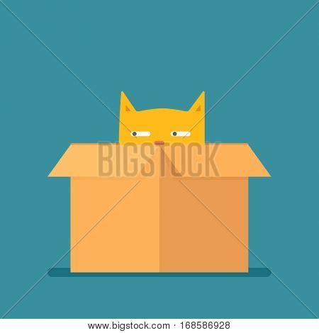 Red cat in a box