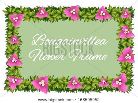 Bougainvillea flowers as frame design illustration