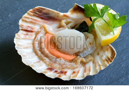 Raw scallops with lemon seafood closeup concept