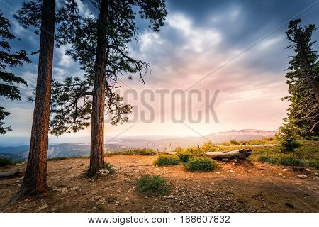 Pine trees on rocky mountain against Bryce Canyon