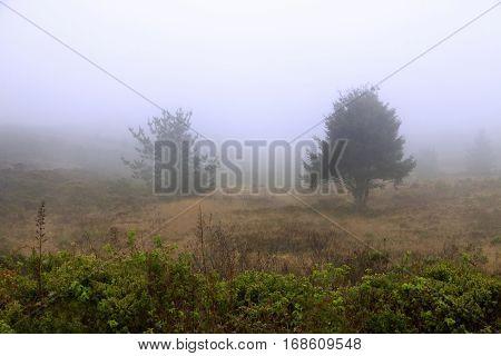 Foggy Morning In California