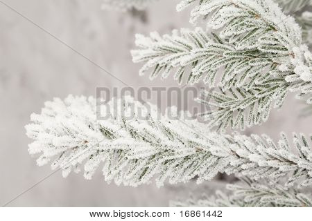 The snow has covered branches