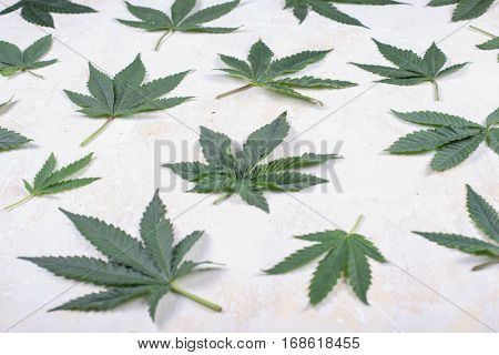 Abstract background with cannabis leaves over white woode background - medical marijuana concept