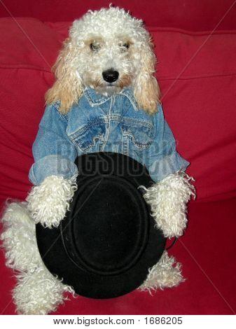 Stylish Cowboy Model Dog