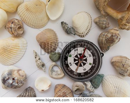 Compass and interesting seashells about tourism and travel