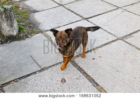 Brown homeless dog in the city park