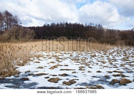 Winter Landscape near Forest Swamp. Close up.