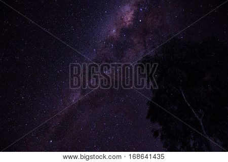 Milky way and eucalyptus seen from central Australia