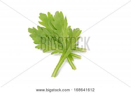 Chrysanthemum coronarium vegetable Isolated on white background
