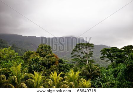 Fog on mountain before tropical downpour scenery