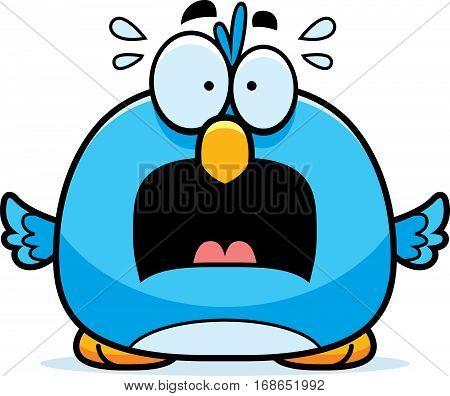 Scared Little Bluebird