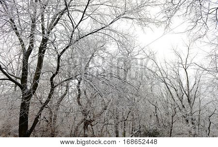 Winter scene with trees cover with ice