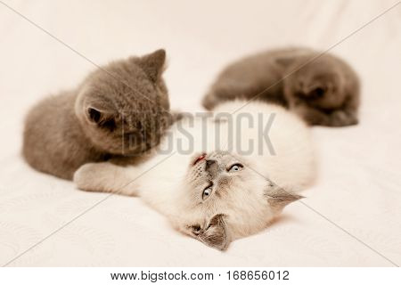Three small kittens lying on pink background