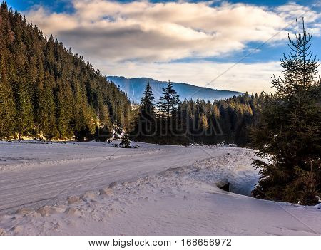 winter mountain landscape. road that leads into the spruce forest covered with snow in evening light