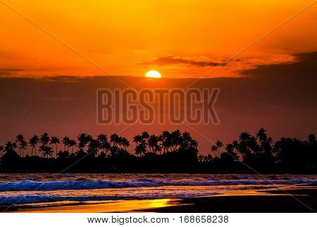 beautiful sunset over the coconut plams on Sri Lanka beach