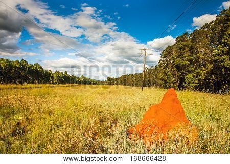 Red termite hill somewhere in South Africa