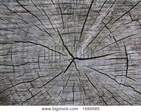 Old Tree Trunk Cross-Section