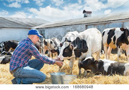 Portrait of Farmer feeding cows in farm