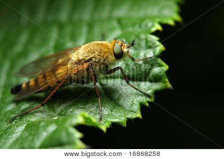 Fly - dangerous vehicle of infection - extremely close up