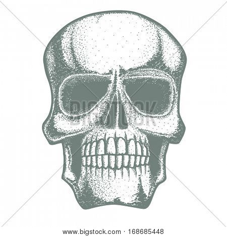 Vector skull illustration. Hand drawn skull. Spooky and scary halloween skull