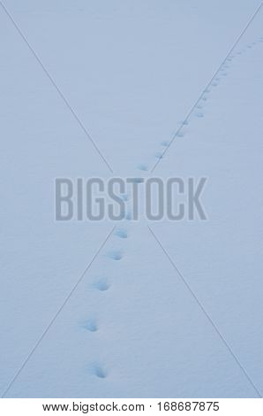 animal tracks in the snow south Bohemia Czech Republic
