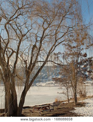 Large Bare Orange Colored Trees On Lake Shore Of Frozen Snow Covered Lake
