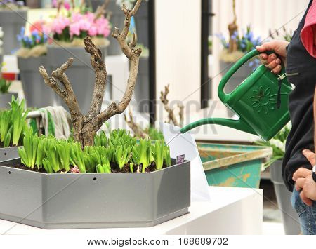 Man watering spring garden terrace with a lot of flowers