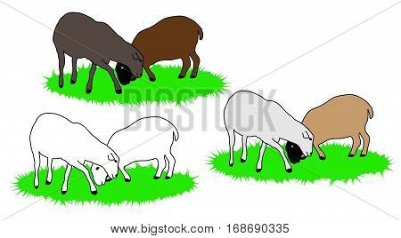 White gray and brown sheep grazing on grass