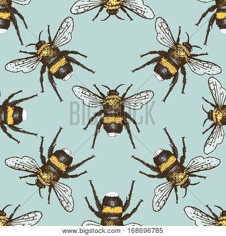 insect beetle seamless pattern, background with engraved animal hand drawn style bumblebee