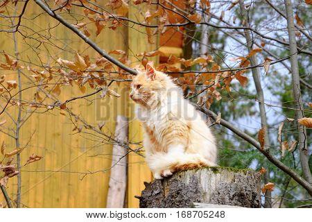 Cute cat sitting on snag in yard