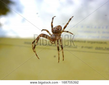 Photo of a European garden spider next to a glass