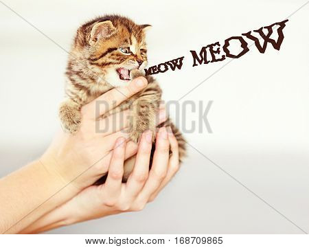 Female hands holding kitten and word MEOW on background