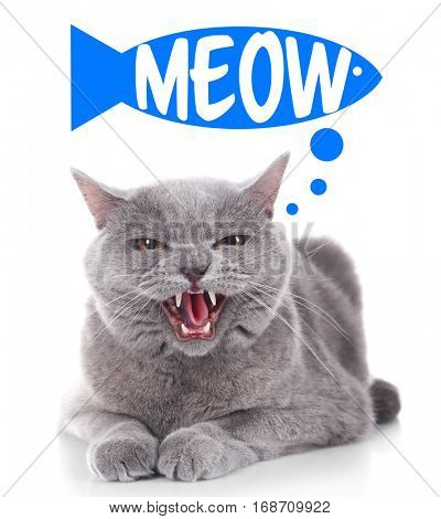 Cute cat and word MEOW on white background
