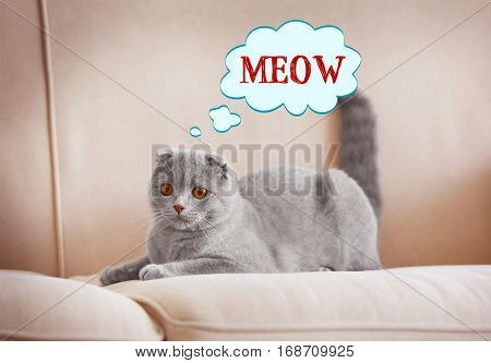 Cute cat lying on sofa and word MEOW on background