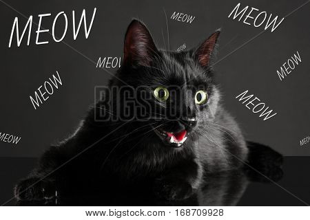 Cute cat and word MEOW on dark background