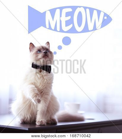 Cute cat  sitting on table and word MEOW on background