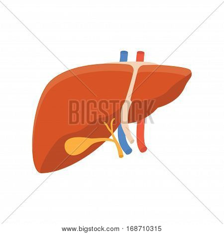Human liver icon internal human organ isolated on white background vector illustration