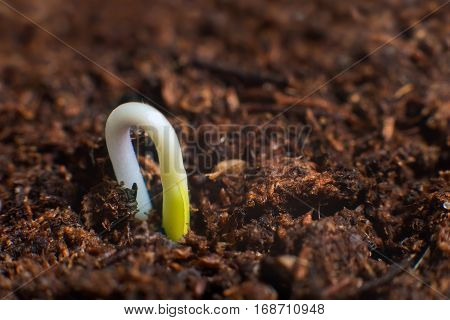 New Life Start. New Beginnings. Plant Germination On Soil.