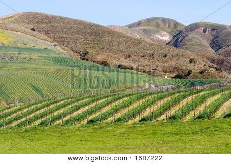 California Winery In Santa Ynez Valley